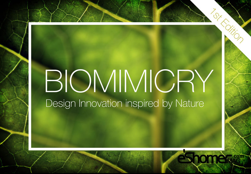 biomimicry-competition