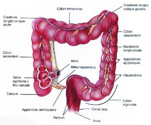 مجله خبری ایشومر 1098289_571716529551442_1042965127_n-1-300x248 اطلاعاتی مفید درباره ميكروب هاي روده سبک زندگي سلامت و پزشکی  هاي ميكروب مفید روده درباره اطلاعاتی
