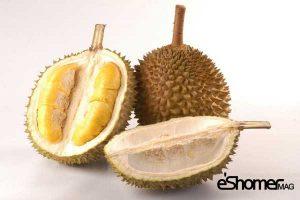 مجله خبری ایشومر DURIAN-treopical-fruit-mag-eshomer-300x200 انواع میوه های استوایی وخواص  شگفت انگیز درمانی آنها(قسمت اول) آشپزی و غذا سبک زندگي  میوه های شگفت سالاک رامبوتان درمانی خواص پوملو انگیز استوایی SALAK RAMBUTAN POMELO