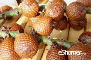مجله خبری ایشومر ExoticFruitPlatter-tropical-mag-eshomer-300x200 انواع میوه های استوایی وخواص  شگفت انگیز درمانی آنها(قسمت اول) آشپزی و غذا سبک زندگي  میوه های شگفت سالاک رامبوتان درمانی خواص پوملو انگیز استوایی SALAK RAMBUTAN POMELO   مجله خبری ایشومر DURIAN-treopical-fruit-mag-eshomer-300x200 انواع میوه های استوایی وخواص  شگفت انگیز درمانی آنها(قسمت اول) آشپزی و غذا سبک زندگي  میوه های شگفت سالاک رامبوتان درمانی خواص پوملو انگیز استوایی SALAK RAMBUTAN POMELO   مجله خبری ایشومر rambutan-treopical-fruit-mag-eshomer-300x188 انواع میوه های استوایی وخواص  شگفت انگیز درمانی آنها(قسمت اول) آشپزی و غذا سبک زندگي  میوه های شگفت سالاک رامبوتان درمانی خواص پوملو انگیز استوایی SALAK RAMBUTAN POMELO   مجله خبری ایشومر salak-treopical-fruit-mag-eshomer-300x200 انواع میوه های استوایی وخواص  شگفت انگیز درمانی آنها(قسمت اول) آشپزی و غذا سبک زندگي  میوه های شگفت سالاک رامبوتان درمانی خواص پوملو انگیز استوایی SALAK RAMBUTAN POMELO
