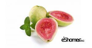 مجله خبری ایشومر GUAVA-mag-eshomer-300x158 انواع میوه های استوایی وخواص شگفت انگیز درمانی آنها(قسمت دوم) آشپزی و غذا سبک زندگي  میوه های شگفت درمانی خواص چمپداک انواع انگیز استوایی استارفروت CEMPEDAK