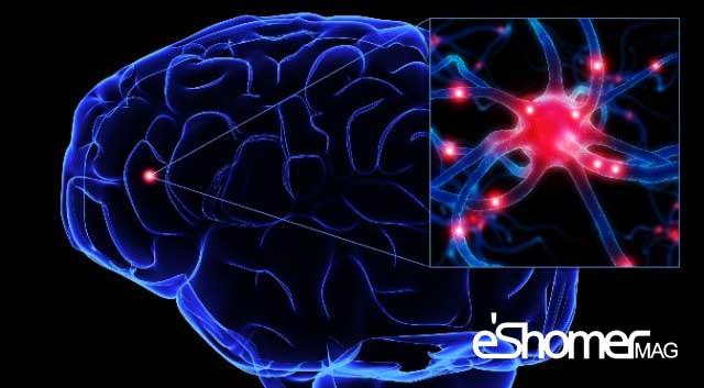 مجله خبری ایشومر neuralstructure-mag-eshomer آسیب های جدی مغز بر اثر غذا خوردن درنیمه شب سبک زندگي سلامت و پزشکی  نیمه شب نیمه مغز غذا شب در خوردن جدی اثر آسیب های آسیب