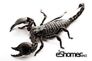 مجله خبری ایشومر scorpion-mag-eshomer-300x200 گرانترین مایعات دنیا در محیط اطراف ما تكنولوژي نوآوری  مایعات گران عقرب شاه دنیا خون خرچنگ جیوه ترین انسولین انسان اطراف