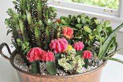 فوت و فن های نگهداری از انواع گیاه کاکتوس