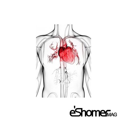 هنگام بروز درد قفسه سینه یا سکته قلبی چه اقداماتی باید انجام داد