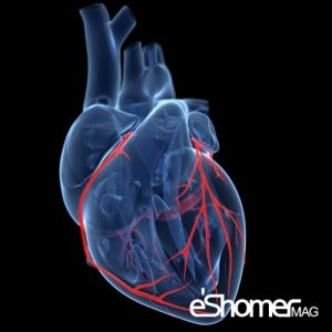 مجله خبری ایشومر 10-نکته-که-پس-از-ترخیص-از-بیمارستان-بعد-از-عمل-جراحی-قلب-باید-رعایت-شود-مجله-خبری-ایشومر-300x300 10 نکته که پس از ترخیص از بیمارستان بعد از عمل جراحی قلب باید رعایت شود سبک زندگي سلامت و پزشکی  قلب عروق کرونر سلامت درمانی درمان بیماری های قلبی درمان خواص درمانی پزشکی
