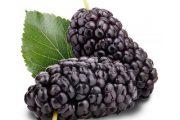 شاه توت و خواص ضد سرطانی آن در میوه درمانی