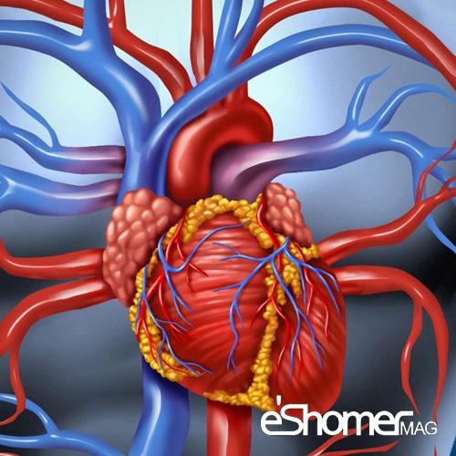 مجله خبری ایشومر فعالیت-حرفه-ای-و-شغلی-پس-از-حمله-قلبی-چگونه-باید-باشد-مجله-خبری-ایشومر فعالیت حرفه ای و شغلی پس از حمله قلبی چگونه باید باشد سبک زندگي سلامت و پزشکی  قلب عروق کرونر سلامت درمانی درمان بیماری های قلبی درمان خواص درمانی پزشکی