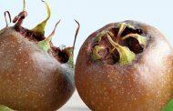 ازگیل و خواص ضد سرطانی آن در میوه درمانی