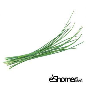 مجله خبری ایشومر -انواع-سبزیجات-و-خواص-درمانی-آنها-،-تره-مجله-خبری-ایشومر-300x300 شناخت انواع سبزیجات و خواص درمانی آنها ، تره سبک زندگي میوه درمانی  گیاهی گیاه سبزیجات سبزی درمانی خواص درمانی خواص تره