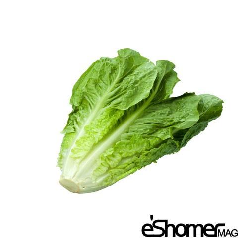مجله خبری ایشومر شناخت-انواع-سبزیجات-و-خواص-درمانی-آنها-،-کاهو-مجله-خبری-ایشومر شناخت انواع سبزیجات و خواص درمانی آنها ، کاهو سبک زندگي میوه درمانی  گیاهی گیاه سبزیجات سبزی درمان خواص درمانی خواص