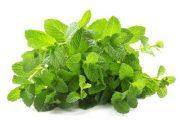 شناخت انواع سبزیجات و خواص درمانی آن ها ، نعناع