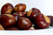 بلوط و خواص ضد سرطانی آن در میوه درمانی