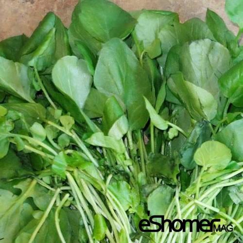 مجله خبری ایشومر شناخت-انواع-سبزیجات-و-خواص-درمانی-آنها-،-شاهی-مجله-خبری-ایشومر شناخت انواع سبزیجات و خواص درمانی آنها ، شاهی سبک زندگي میوه درمانی  گیاهی شاهی سبزیجات سبزی خواص درمانی