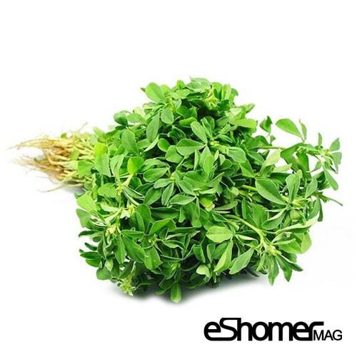 شناخت انواع سبزیجات و خواص درمانی آنها ، شنبلیله
