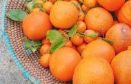 نارنج و خواص ضد سرطانی آن در میوه درمانی
