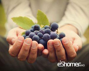 مجله خبری ایشومر خواص-درمانی-خواص-ضدسرطانی-میوه-ها-بر-اساس-رنگ-در-میوه-درمانی-1-مجله-خبری-ایشومر-300x242 خواص درمانی خواص ضدسرطانی میوه ها بر اساس رنگ در میوه درمانی 1 سبک زندگي میوه درمانی  میوه ضد سرطان میوه درمانی میوه رنگ خواص ضد سرطانی میوه