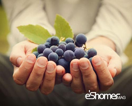 مجله خبری ایشومر خواص-درمانی-خواص-ضدسرطانی-میوه-ها-بر-اساس-رنگ-در-میوه-درمانی-1-مجله-خبری-ایشومر خواص درمانی خواص ضدسرطانی میوه ها بر اساس رنگ در میوه درمانی 1 سبک زندگي میوه درمانی  میوه ضد سرطان میوه درمانی میوه رنگ خواص ضد سرطانی میوه