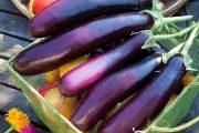 شناخت انواع سبزیجات خواص درمانی سبزیجات ، بادنجان