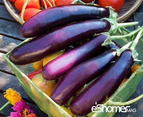 مجله خبری ایشومر شناخت-انواع-سبزیجات-خواص-درمانی-سبزیجات-،-بادنجان-مجله-خبری-ایشومر-2 شناخت انواع سبزیجات خواص درمانی سبزیجات ، بادنجان سبک زندگي میوه درمانی  میوه درمانی سبزیجات خواص درمانی سبزیجات خواص درمانی بادنجان