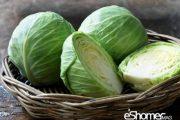 شناخت انواع سبزیجات خواص درمانی سبزیجات ، کلم پیچ