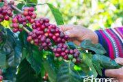 5 نکته جالب و جذاب درباره قهوه که نمی دانستید