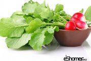 شناخت انواع سبزیجات ، خواص درمانی سبزیجات ، برگ تربچه 2