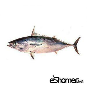 مجله خبری ایشومر شناخت-نحوه-پخت-انواع-ماهی-جنوب-آموزش-آشپزی-ماهی-زرده-گباب-مجله-خبری-ایشومر-300x300 شناخت و نحوه پخت انواع ماهی جنوب در آموزش آشپزی، ماهی زرده و گباب آشپزی و غذا سبک زندگي  نحوه پخت انواع ماهی ماهی جنوب ماهی گباب زرده آموزش آشپزی