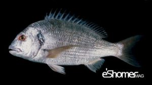 مجله خبری ایشومر -و-نحوه-پخت-انواع-ماهی-جنوب-در-آموزش-آشپزی-،-ماهی-سبیتی-مجله-خبری-ایشومر-300x168 شناخت و نحوه پخت انواع ماهی جنوب در آموزش آشپزی ، ماهی سبیتی آشپزی و غذا سبک زندگي  نحوه پخت انواع ماهی ماهی جنوب ماهی سبیتی آموزش آشپزی