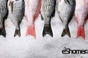 تشخیص ماهی تازه از ماهی مانده در آموزش آشپزی