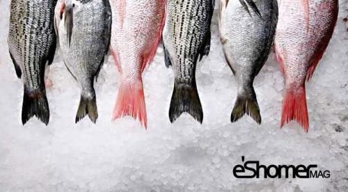 مجله خبری ایشومر نحوه-شناختن-ماهی-تازه-از-ماهی-مانده-در-آموزش-آشپزی-مجله-خبری-ایشومر تشخیص ماهی تازه از ماهی مانده در آموزش آشپزی آشپزی و غذا سبک زندگي  ماهی مانده ماهی تازه ماهی آموزش آشپزی