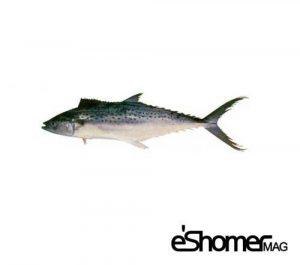 مجله خبری ایشومر -و-نحوه-پخت-انواع-ماهی-جنوب-در-آموزش-آشپزی-،-ماهی-غباد-مجله-خبری-ایشومر-300x265 شناخت و نحوه پخت انواع ماهی جنوب در آموزش آشپزی ، ماهی غباد آشپزی و غذا سبک زندگي  نحوه پخت انواع ماهی ماهی جنوب ماهی غباد آموزش آشپزی