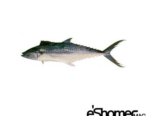 شناخت و نحوه پخت انواع ماهی جنوب در آموزش آشپزی ، ماهی غباد