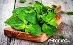 مجله خبری ایشومر 13-مزایای-قابل-توجه-نعناع-در-درمان-بیماری-ها-1-مجله-خبری-ایشومر-300x185 13 مزایای قابل توجه نعناع در درمان بیماری ها 1 سبک زندگي میوه درمانی  نعناع نعنا مزایای درمان بیماری خواص درمانی سبزیجات