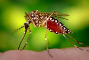 عفونت زیکا در فصل سرما