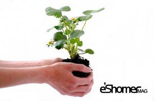 آلودگی هوا ، دلایل آن و راه کارهای ساده تصفیه هوا با گیاهان