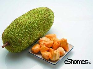 مجله خبری ایشومر CEMPEDAK-mag-eshomer-300x223 انواع میوه های استوایی وخواص شگفت انگیز درمانی آنها(قسمت دوم) آشپزی و غذا سبک زندگي  میوه های شگفت درمانی خواص چمپداک انواع انگیز استوایی استارفروت CEMPEDAK