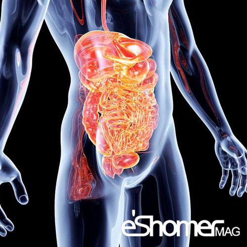مجله خبری ایشومر The-enteric-nervous-system-mag-eshomer اثر شگفت انگیز سیستم گوارشی روده درخلق و خو و رفتار افراد سبک زندگي سلامت و پزشکی گوارشی شگفت انگیز سیستم روده درمان افسردگی خلق و خو و رفتار بهود روابط اجتماعی