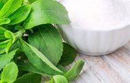 آیا شکر برگ برای انسانها و افراد دیابتی مفید است