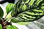 حذف آلاینده ها و تصفیه هوا با گیاهان خانگی بدون عوارض