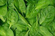پاکسازی کامل روده ها با خواص درمانی گیاه اسفناج
