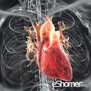 مجله خبری ایشومر بعد-از-انجام-آنژیوگرافی-قلب-چه-اتفاقی-می-افتد-مجله-خبری-ایشومر-300x300 بعد از انجام آنژیوگرافی قلب چه اتفاقی می افتد سبک زندگي سلامت و پزشکی  قلب سلامت و پزشکی سلامت درمان بیماری های قلبی پزشکی اتفاقی آنژیوگرافی آنژیوپلاستی