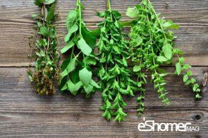 مجله خبری ایشومر چای-نعناع-و-اثر-درمانی-آن-در-گلو-درد-و-اسهال2-مجله-خبری-ایشومر-300x199 چای نعناع و اثر درمانی آن در گلو درد و اسهال تازه ها سبک زندگي نعناع گیاه دمنوش درمانی درمان خواص درمانی چای
