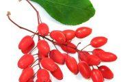 زرشک و خواص ضد سرطانی آن در میوه درمانی