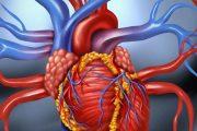 فعالیت حرفه ای و شغلی پس از حمله قلبی چگونه باید باشد
