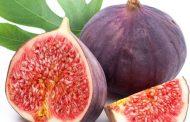 میوه انجیر و خواص ضد سرطانی آن در میوه درمانی