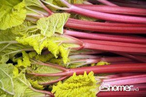 مجله خبری ایشومر شناخت-انواع-سبزیجات-و-خواص-درمانی-آنها-،-ریواس-1-مجله-خبری-ایشومر-300x200 شناخت انواع سبزیجات و خواص درمانی آنها ، ریواس سبک زندگي میوه درمانی  گیاهی گیاه سبزیجات سبزی ریواس درمان خواص درمانی خواص