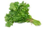 شناخت انواع سبزیجات و خواص درمانی آن ها ، گشنیز