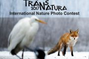 فراخوان مسابقه بین المللی عکاسی TransNatura 2017