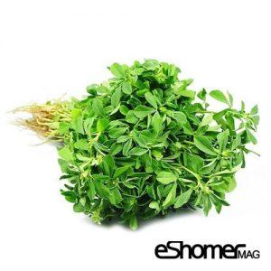 مجله خبری ایشومر شناخت-انواع-سبزیجات-و-خواص-درمانی-آنها-،-شنبلیله-مجله-خبری-ایشومر-300x300 شناخت انواع سبزیجات و خواص درمانی آنها ، شنبلیله سبک زندگي میوه درمانی  میوه درمانی گیاهی کاهش قند خون شنبلیله سبزیجات سبزی رفع کم خونی خواص درمانی سبزیجات